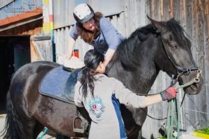 Ausrüstungsgewöhnung des jungen Pferdes in der Bodenarbeit