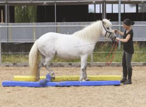 Bodenarbeit bietet Abwechslung fürs Pferd