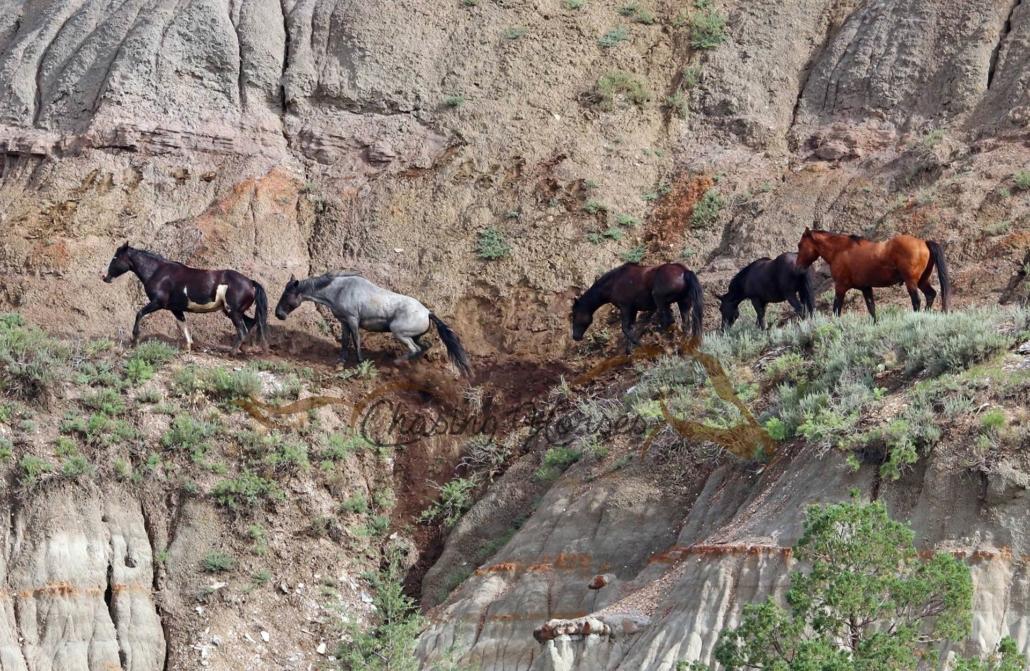 Bodenarbeit bietet dem Pferd Abwechslung