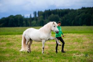 Die Bodenarbeit wärmt Pferd und Mensch optimal auf