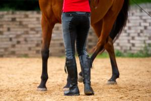 Die Gymnastizierung und somit die Gesunderhaltung von Pferden beginnt für mich immer am Boden!