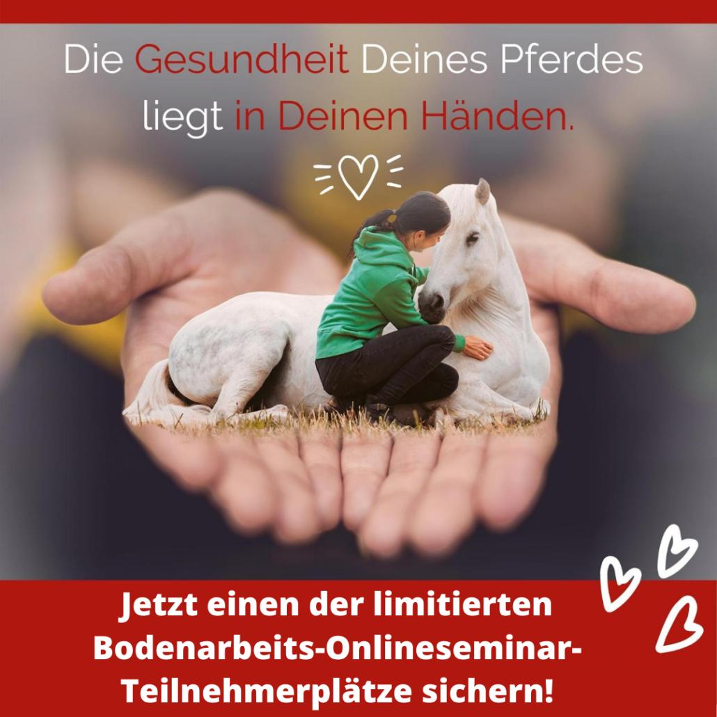 Sandra_Fencl_Bodenarbeits_Online_Seminar