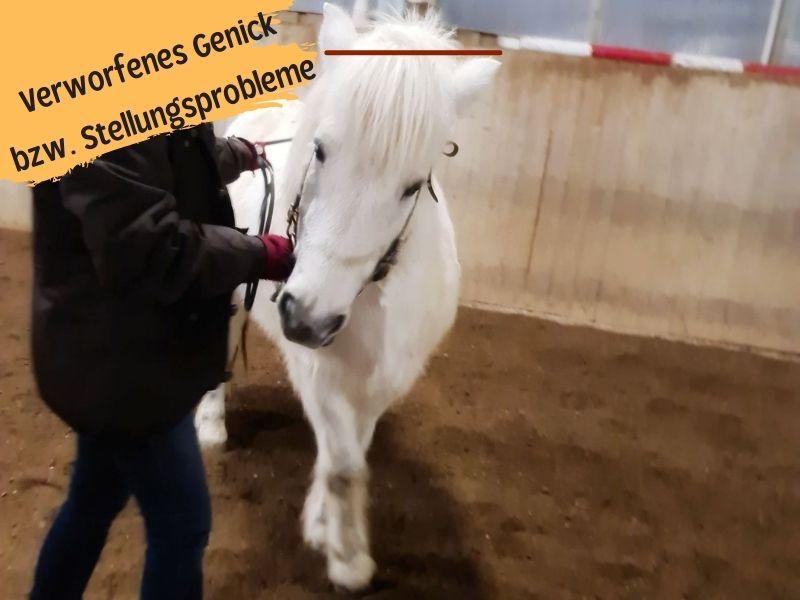 Verworfenes Genick und Stellungsprobleme beim Pferd
