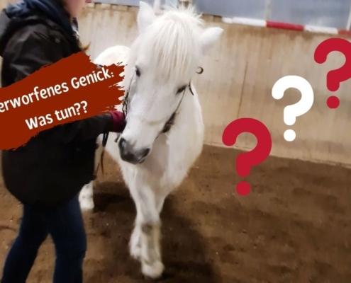 Verworfenes Genick und Stellungsprobleme beim Pferd Ursachen und Lösungen