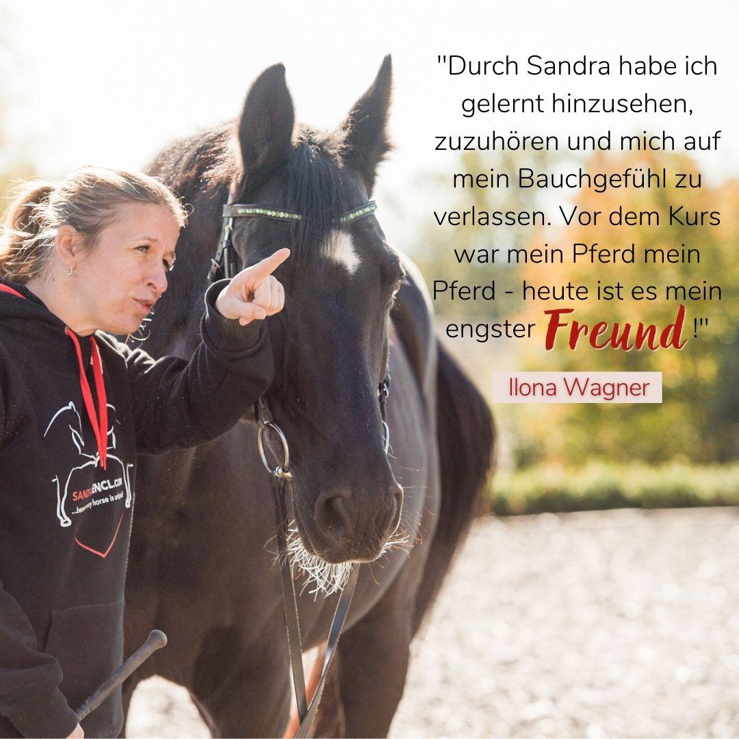 Kundenmeinung Sandra Fencl Onlinepferdekurse