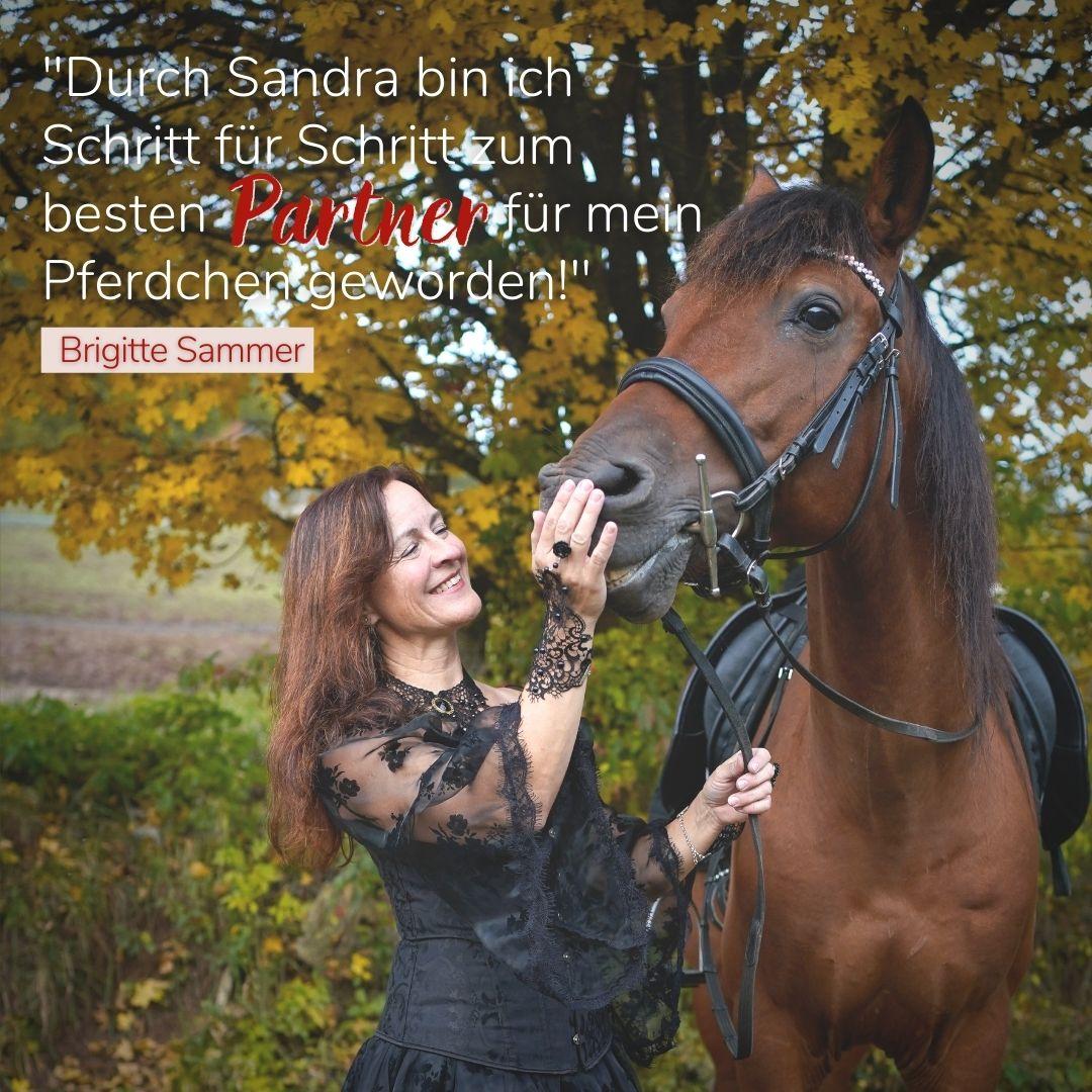 Sandra Fencl Onlinekurs Kritik