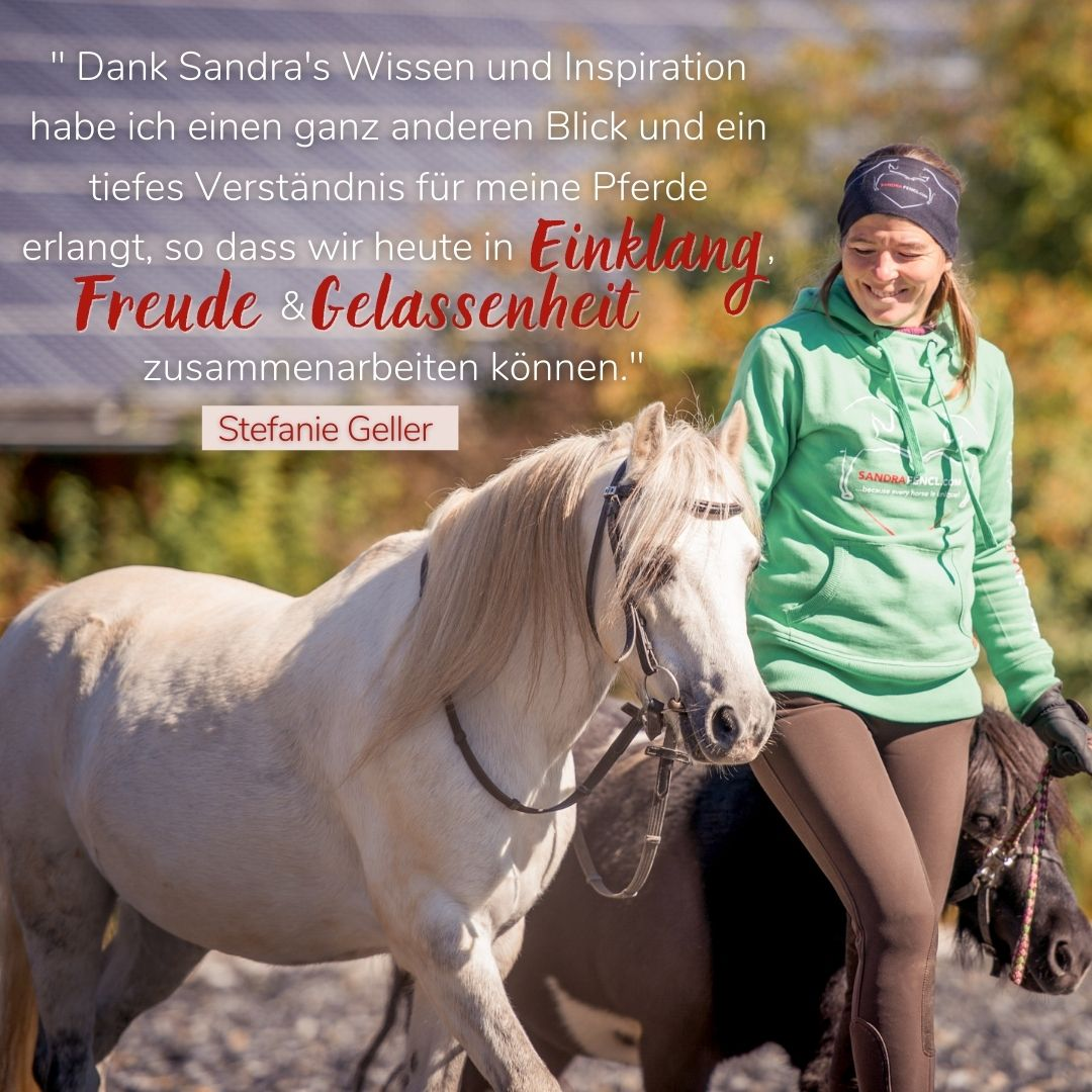 Sandra Fencl Pferde Onlinekurs Feedback