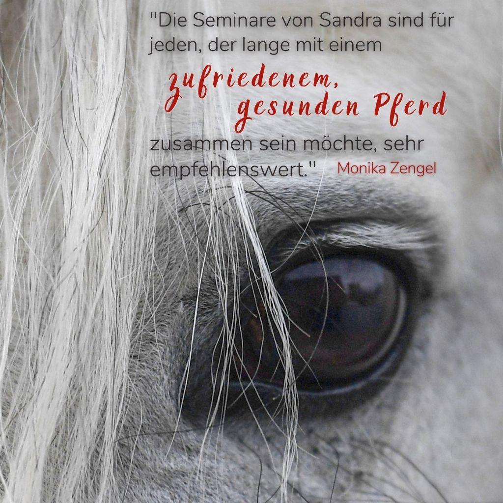 Bodenarbeits Seminar Sandra Fencl Feedback