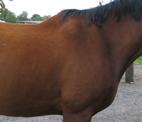 Ausrüstungskontrolle beim Pferd